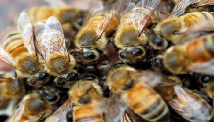 Пчелы помешали началу матча чемпионата Бразилии