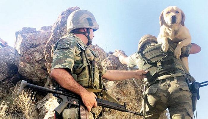 Mayın arama köpeğine çarpan askerin TSK ile ilişiği kesildi