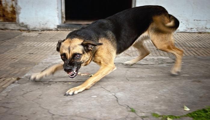 Как понять, что собака может на вас напасть?