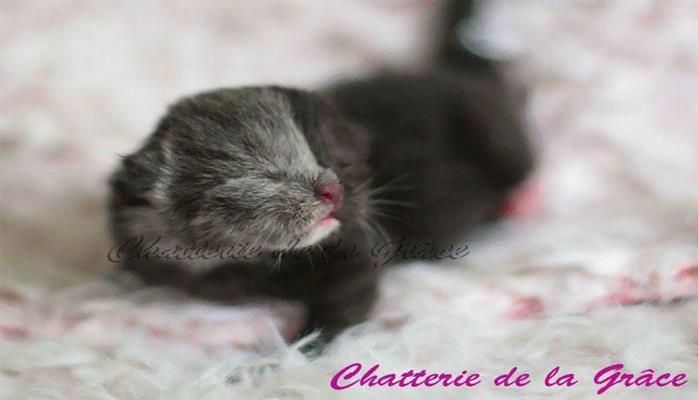 Котенок с «двумя лицами» вырос в самую красивую кошку на Земле