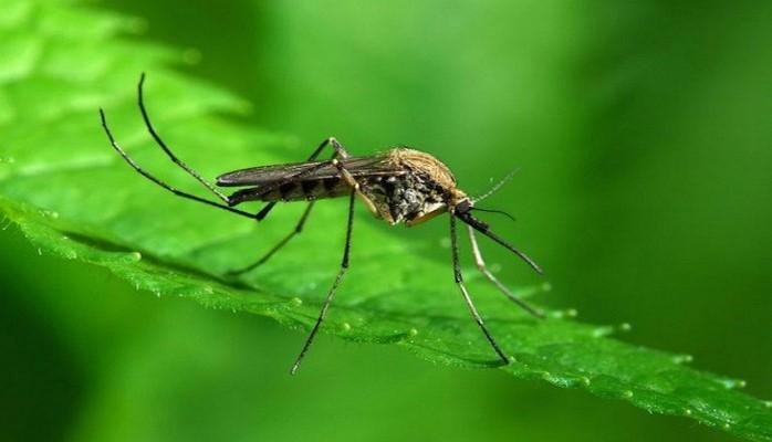 Чем опасен укус комара