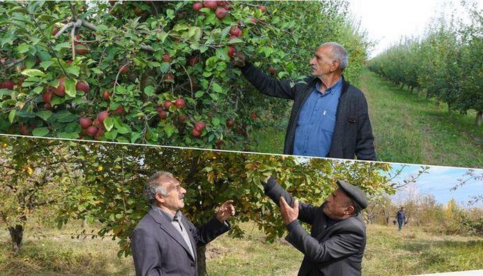 Для 250 семей закладываются фруктовые сады