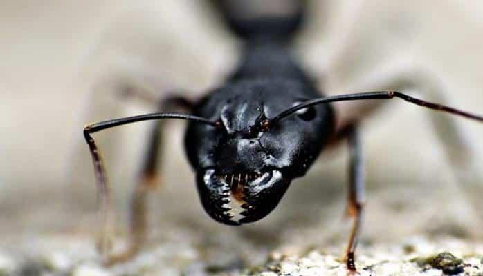 Пустынные муравьи научили роботов ориентироваться по Солнцу