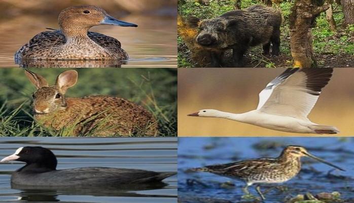 На какие виды животных можно охотиться?