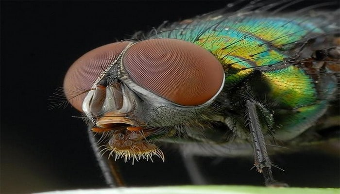 Böceklerin Dünyayı Şekillendirdiğinin 10 Kanıtı