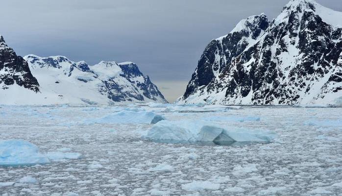 Ученые: В Антарктиде обнаружен новый вид рыб