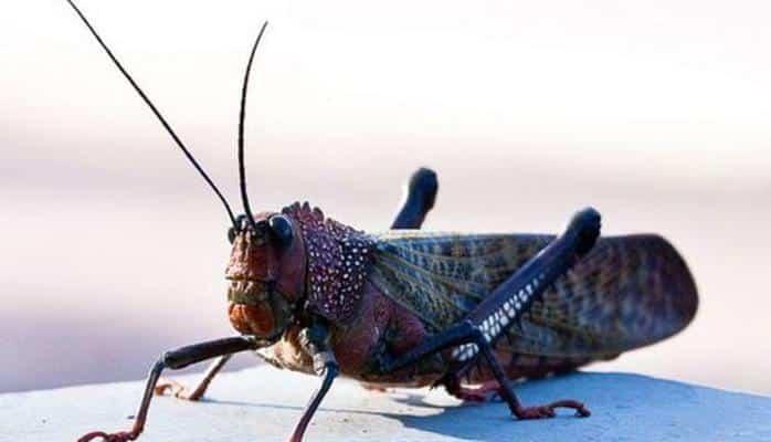 Ученые призвали людей есть насекомых