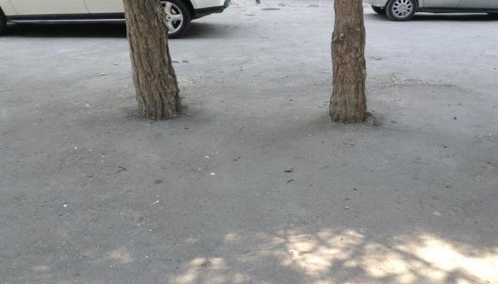 Yasamalda ağacların diblərini asfaltladılar
