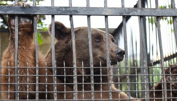 Bakı zooparkına giriş bahalaşacaq - Direktor yeni zooparkın açılışından DANIŞDI