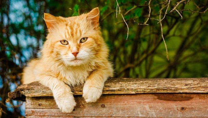 Ученые доказали, что кошки нас слушают