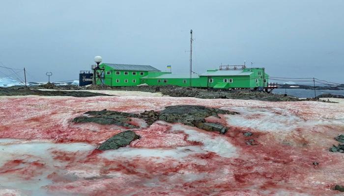 Antarktidada qırmızı qar yağıb