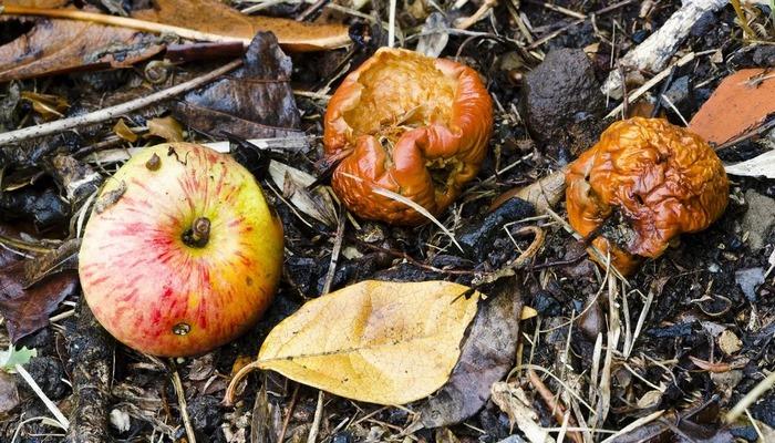 Fermentasyonu Nasıl Keşfettik? Fermente Olmuş Yiyecekler, İnsansı Evrimine Nasıl Yön Verdi?