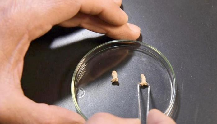 В Польше археологи нашли человеческие останки старше 100 тыс. лет