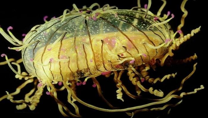Ученые назвали животное, которое живет вечно