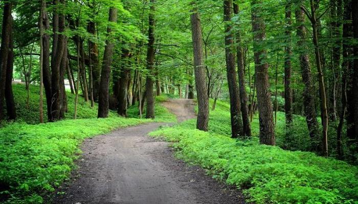 Ученые назвали плохим знаком быстрый рост деревьев