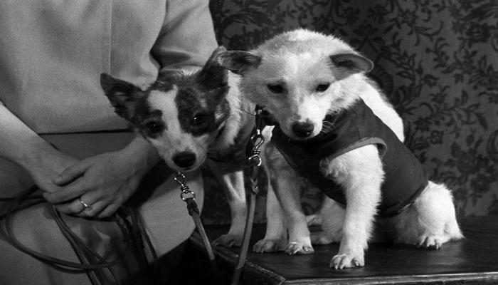 FOTOĞRAF 'Dört ayaklı' kozmonot Belka ve Strelka isimli köpeklerin tarihi uzay yolculuğu 60 yıl önce gerçekleşti