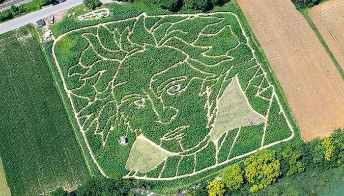 Günəbaxan tarlasında Bethovenin nəhəng portreti yaradıldı