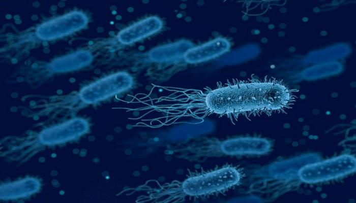 Hava ilə qidalanan bakteriya aşkarlanıb