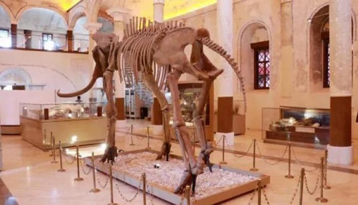 İki milyon yıllık fosiller bu müzede sergileniyor