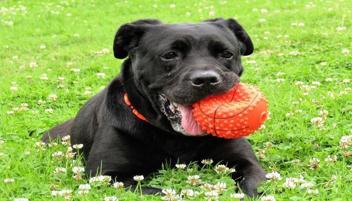 Как понять, что собака вам полностью доверяет: эксперты назвали 5 признаков