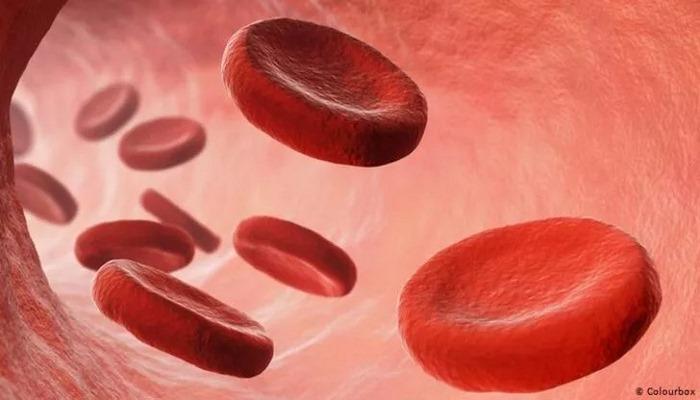 Kan incelticiler Covid-19'u atlatma şansını artıyor