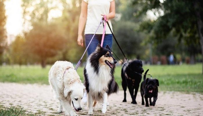 Köpek cinsleri nelerdir? Küçük, büyük, cins ve süs köpeği cinsleri ve özellikleri