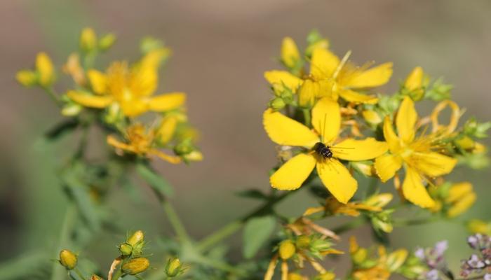 Mərkəzi Nəbatat Bağının kolleksiyasında viruslara qarşı mübarizədə istifadə olunan dərman bitkiləri mövcuddur