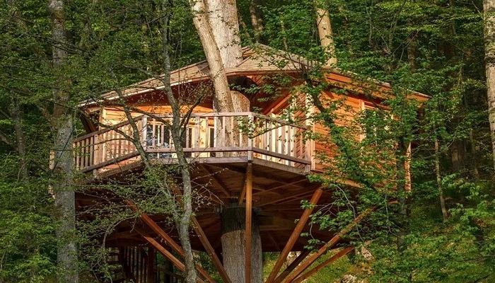 Топ-5 отелей на деревьях