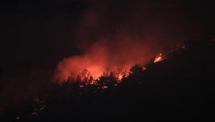 В турецкой провинции Адана вспыхнул лесной пожар