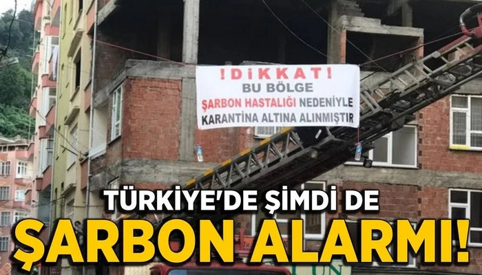 Türkiye'de şimdi de şarbon alarmı!