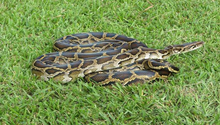 В Азербайджане предлагается создание специализированной структуры для защиты населения от змей