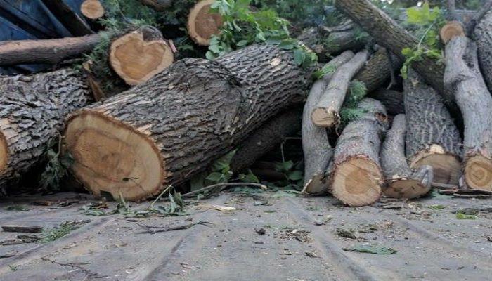 В Шеки по факту вырубки деревьев возбуждено уголовное дело