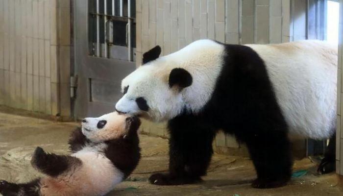 В вашингтонском зоопарке родилась панда