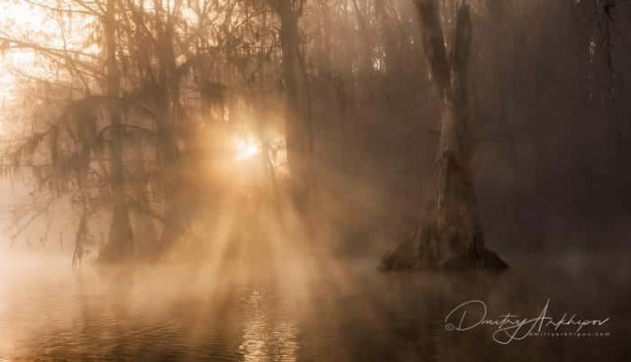 Guardians of swamps