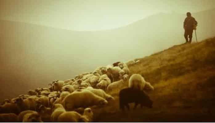 Bələdiyyənin örüş yürini şumlayan şəxs 32000 manat cərimələndi və...