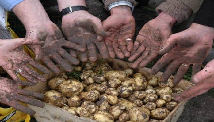 10 самых дорогих продуктов питания в мире