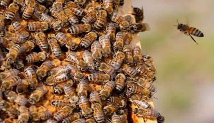 Пчелы устроили возле улья групповой танец
