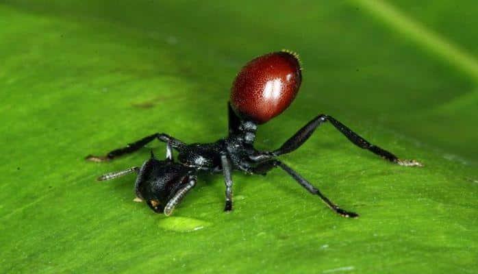 Удивительные паразиты, способные управлять поведением своих хозяев