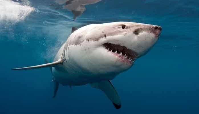 Köpək balığının GoPro-ya hücumu