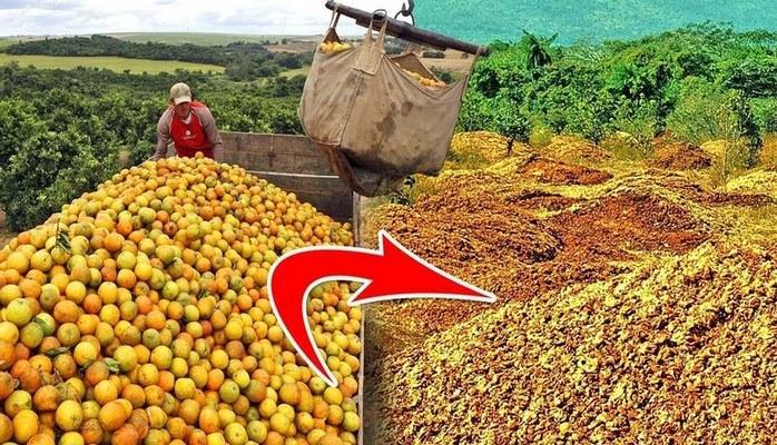 Ученые выкинули 12000 тонн апельсинов, а вернувшись через 20 лет, не узнали лес