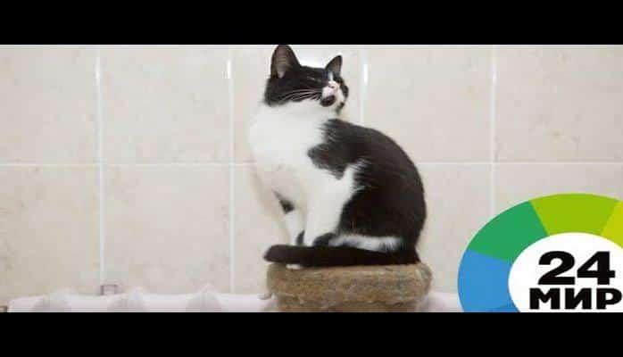 Два года воюют с охраной: коты сделали музей в Японии известным на весь мир